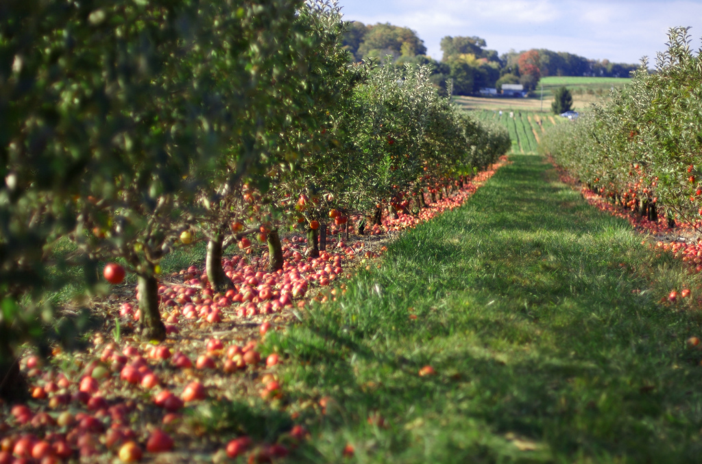Apple Picking: Plan Your Trip Now!