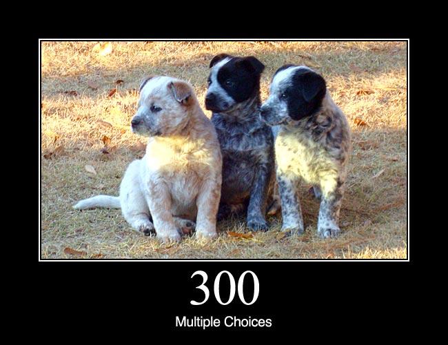 300 1