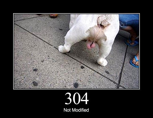304 1