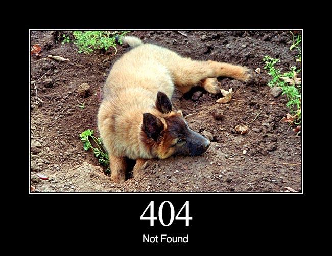 404 1