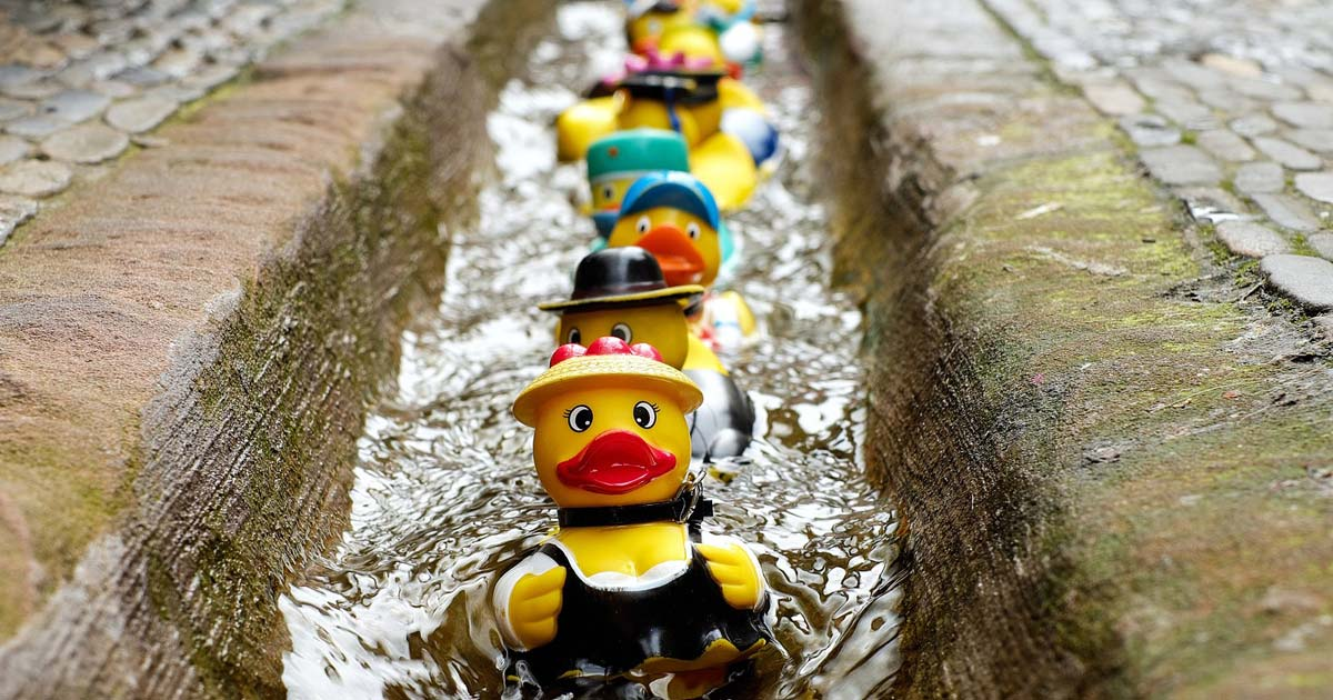 Rubber toys in the shape of ducks gliding in a stream of water between two sidewalks..