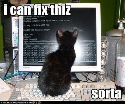 cat-can-fix