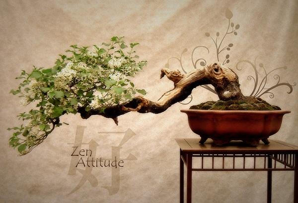 zen_attitude