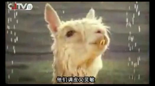 chinese_censorship_0317
