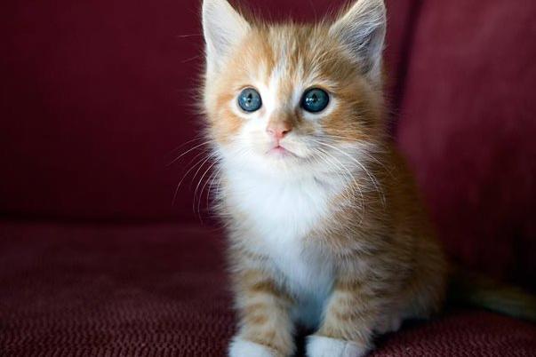 05-kitten-cuteness-1