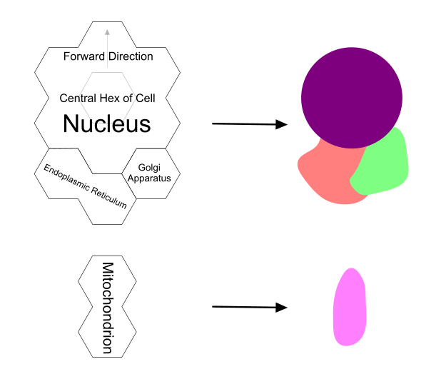 organelle hexes