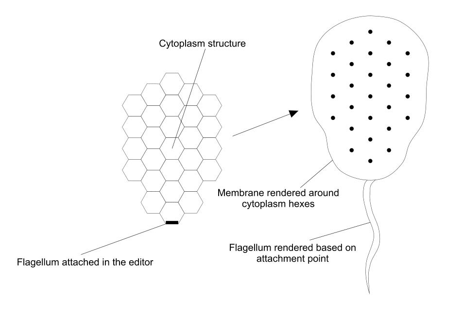 membrane rendering