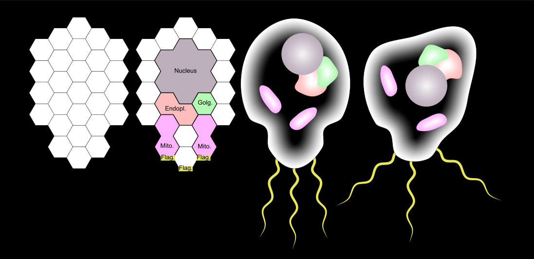 organelle hexes complete